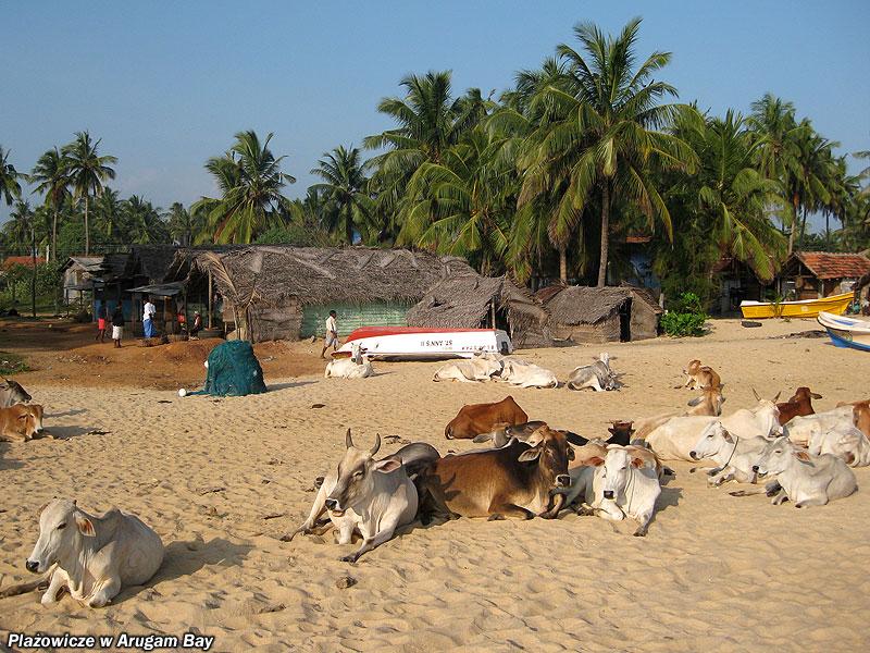 Plażowicze w Arugam Bay.