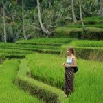 Tarasy ryżowe na Jawie