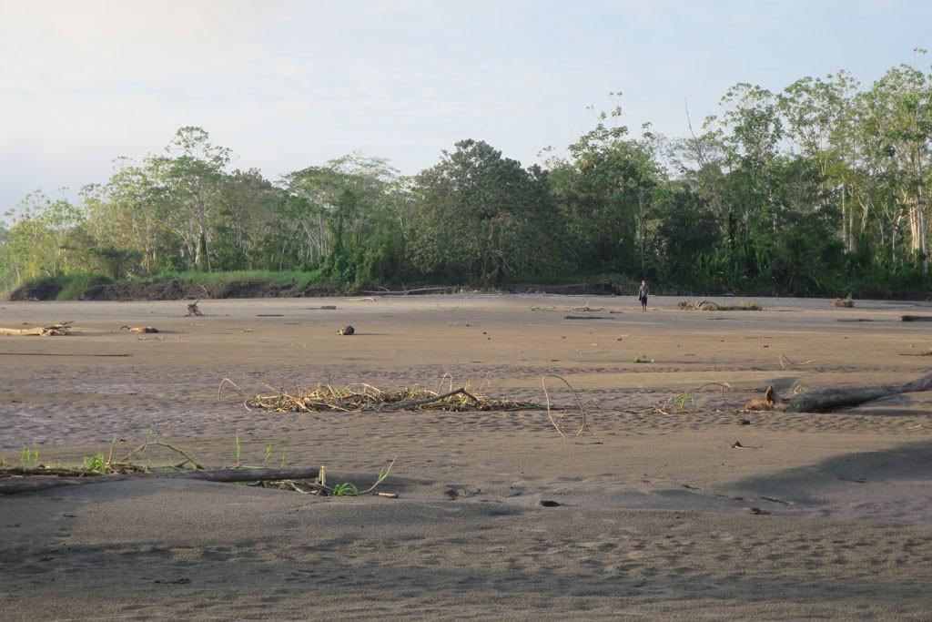 Plaża z lasem deszczowym w tle