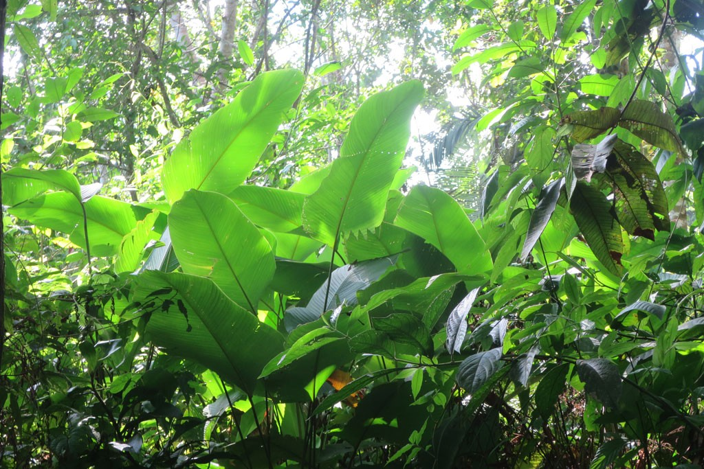 Zieleń dżungli