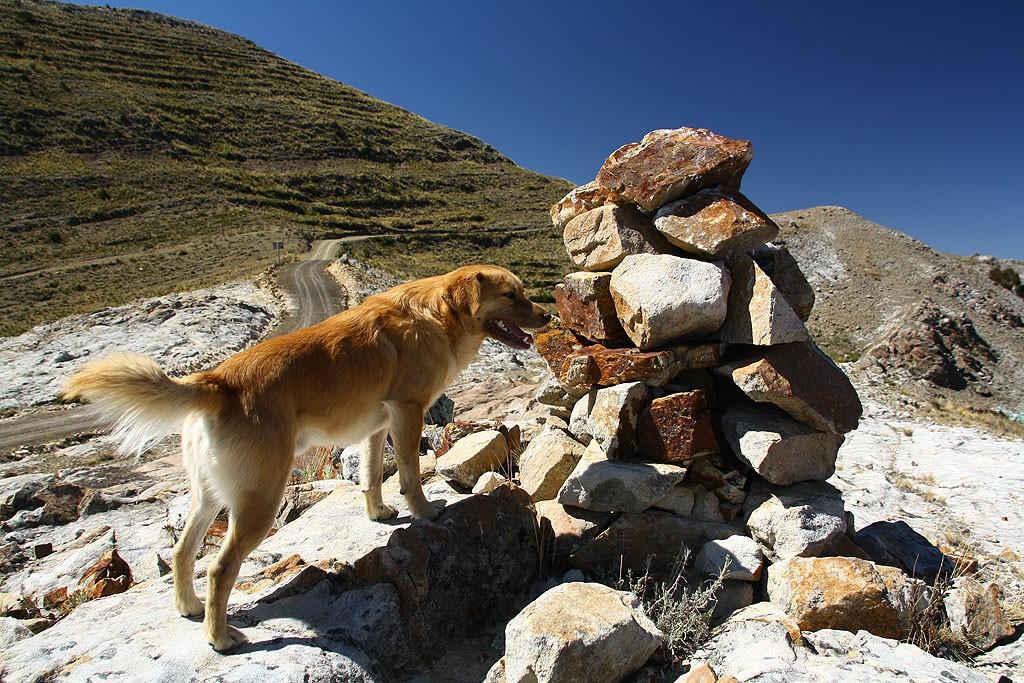 Perrito towarzyszyl nam w wedrowce z Titicachi do Yampupaty. Poprowadzil nas tez skrotem, za co dostal kawalek kielbasy.