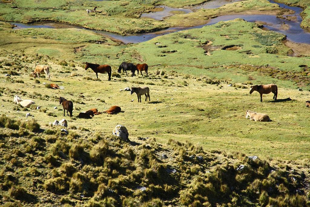 Pastwiska w dolinie rzeki Machaycancha