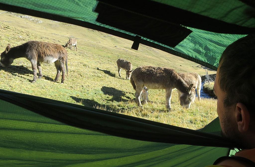 Dzień czwarty. Stado osłów obległo namiot i rozszarpało worek ze śmieciami.