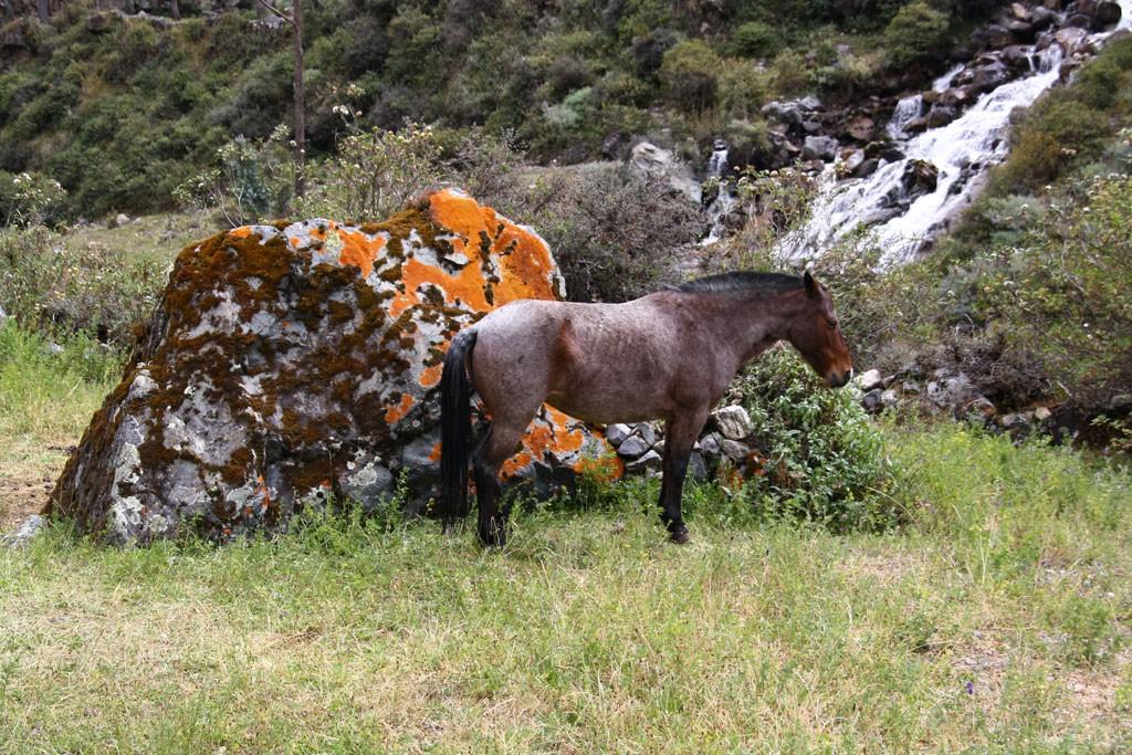 Jaki koń jest każdy widzi.