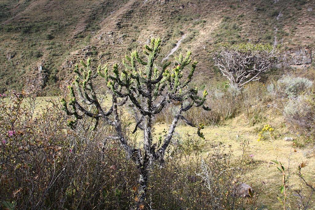 Dzień dziewiąty, schodzimy do strefy kaktusów. Czas na zmianę klimatu!