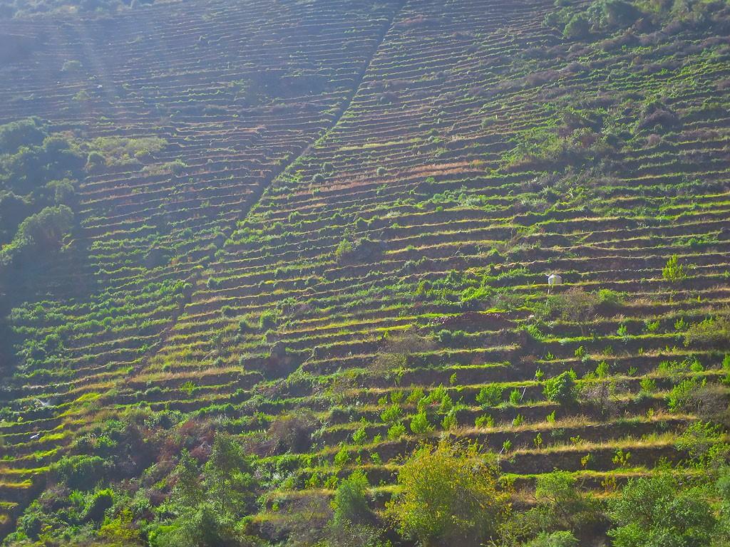Malo znane terasy inkaskie, schowane w bocznej dolinie, a polozone zaledwie 4 km od Ollantaytambo