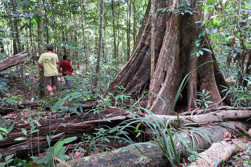 Wędrując po dżungli