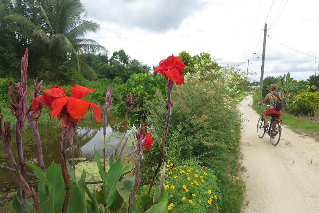 Dawne plantacje w Pepperpot