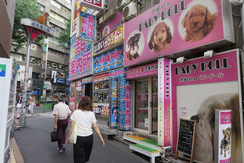 Małe pieski i małe kotki też są oczywiście kawaii. Tutaj japońska wersja sklepu zoologicznego.