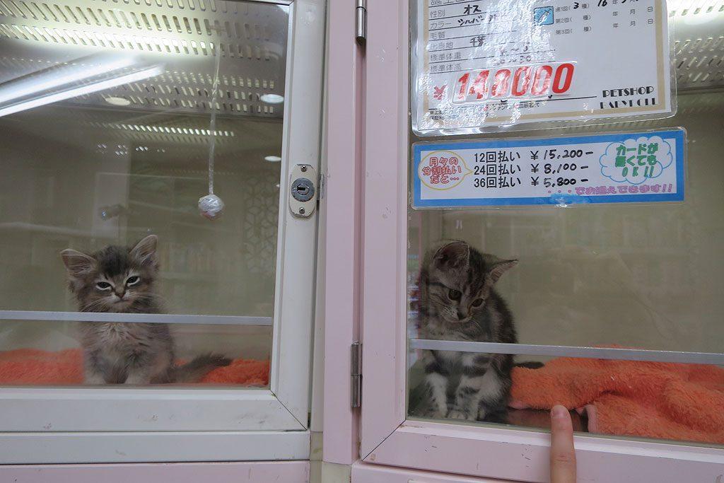 Ten kawaii kotek kosztuje, bagatela, kawaii 5700 złotych.