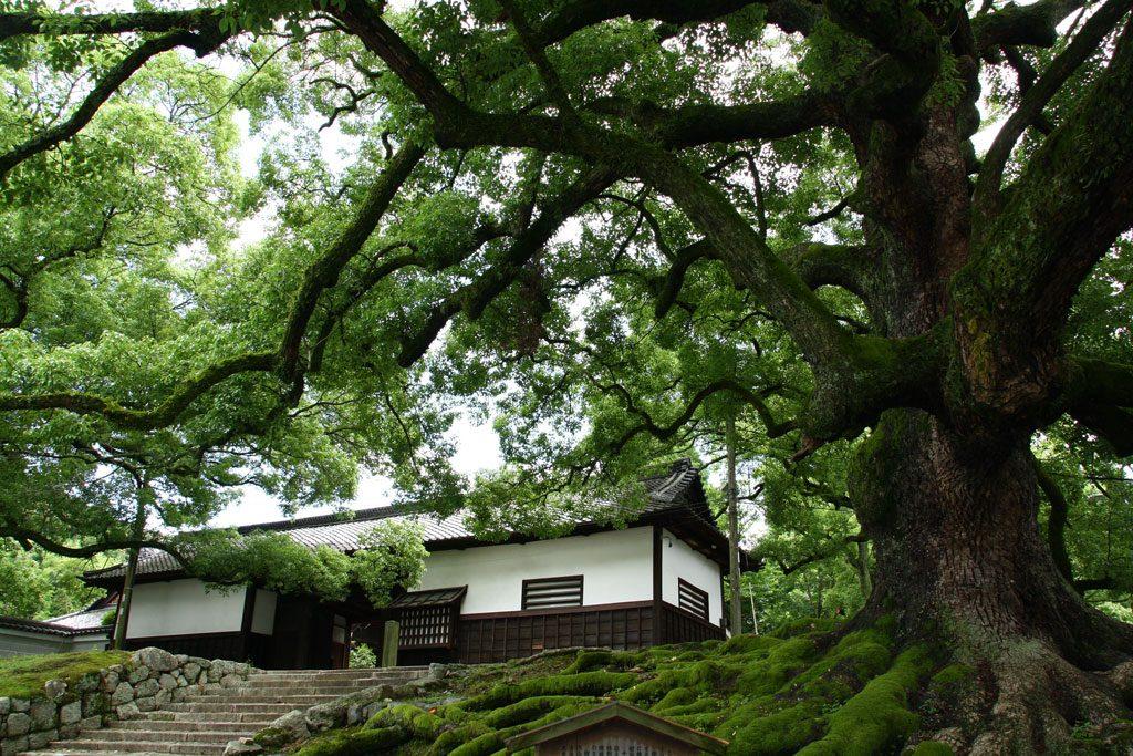Wejście do świątyni i ogrodu Shorenin.